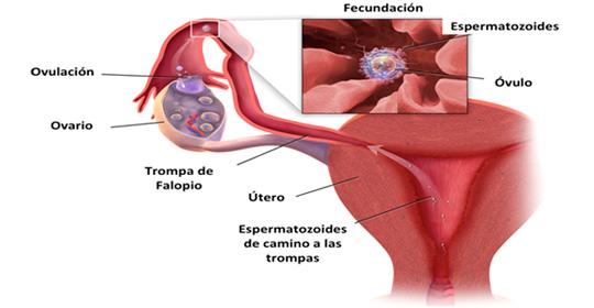 4b00f0b3b Servicio de Ginecología y Obstetricia del Hospital Clínico de ...